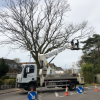 Tree pruning services in Dorset for home & business