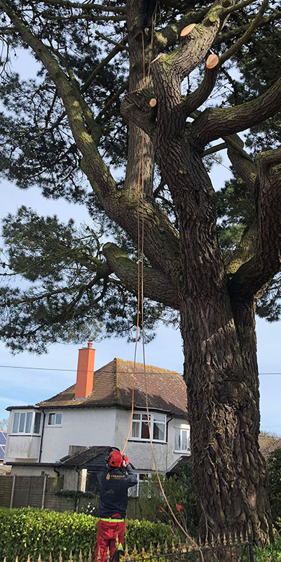 Mark Hooper Tree Surgeons - Tree Treatment, Maintenance, Felling and Repair
